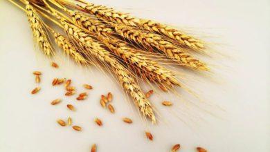 关于麸质和谷物的7个常见问题的照片